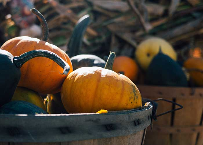 Fall Events In Noco